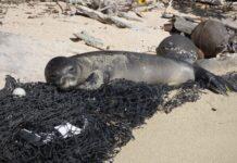 Disastro ambientale in Kamchatka