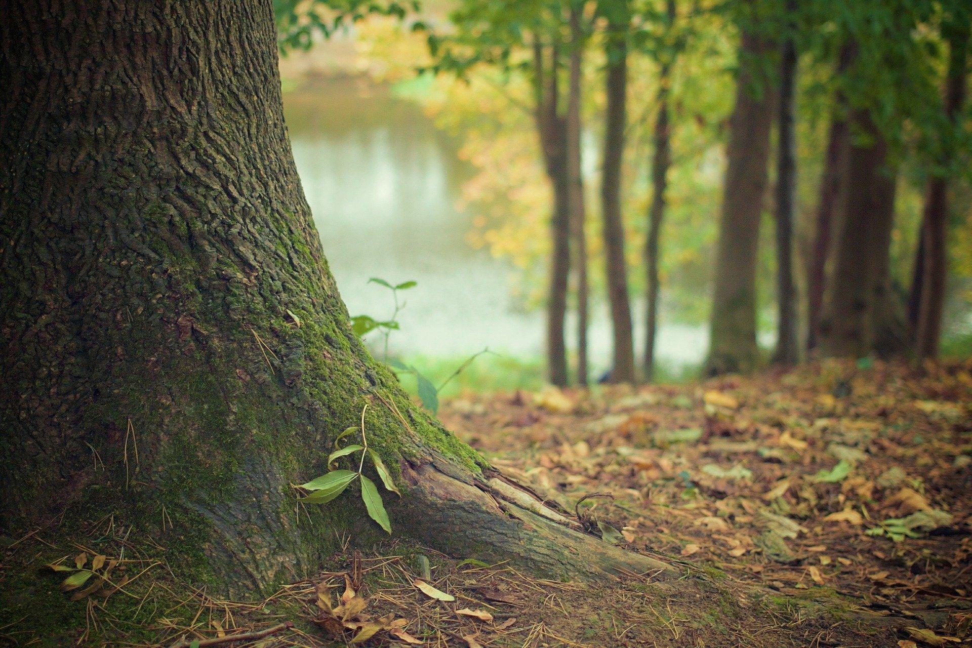 Avventure tra i boschi