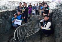ritrovamento fossile