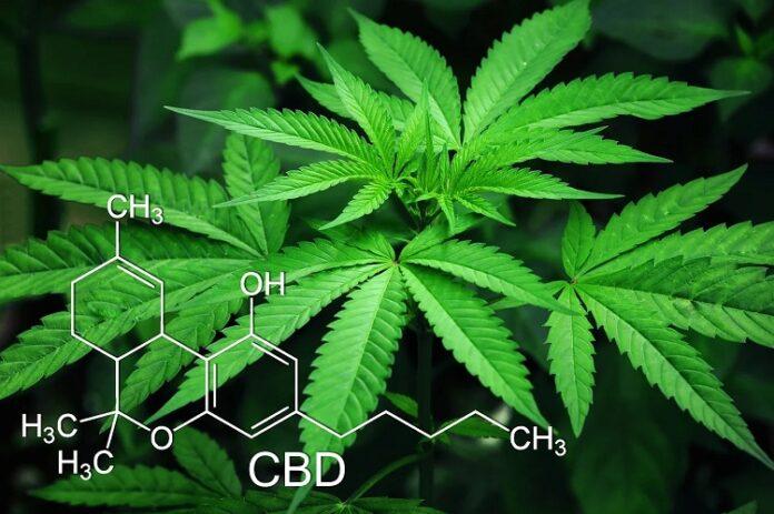 Cannabis: