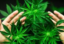 Decisione dell'ONU sulla cannabis
