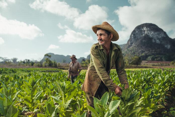 Agricoltori indiani