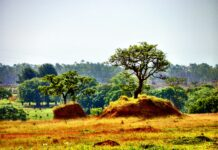 Il cerrado e La Foresta amazzonica