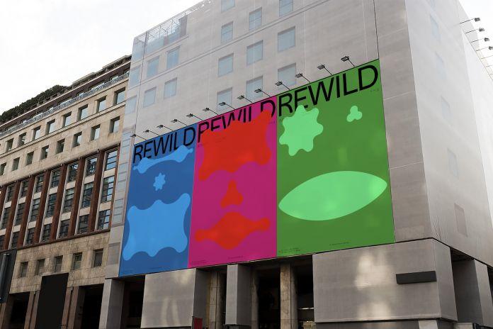 Diatomee a Rewild