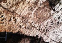 Impronte fossili alla Gardetta