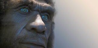Neanderthal: