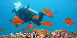 Scubadvisor è l'App ideata su misura per i sea lovers