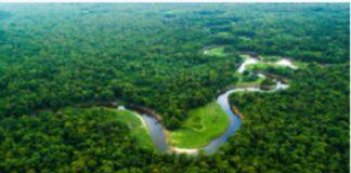 Appezzamenti di foresta pluviale