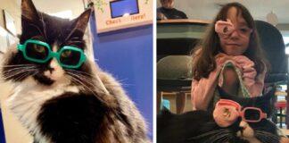 Gatto con gli occhiali Stati Uniti