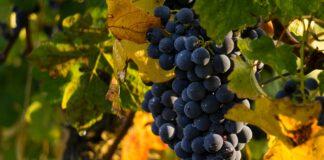 """Bordeaux: stappata la prima bottiglia del """"vino spaziale"""""""