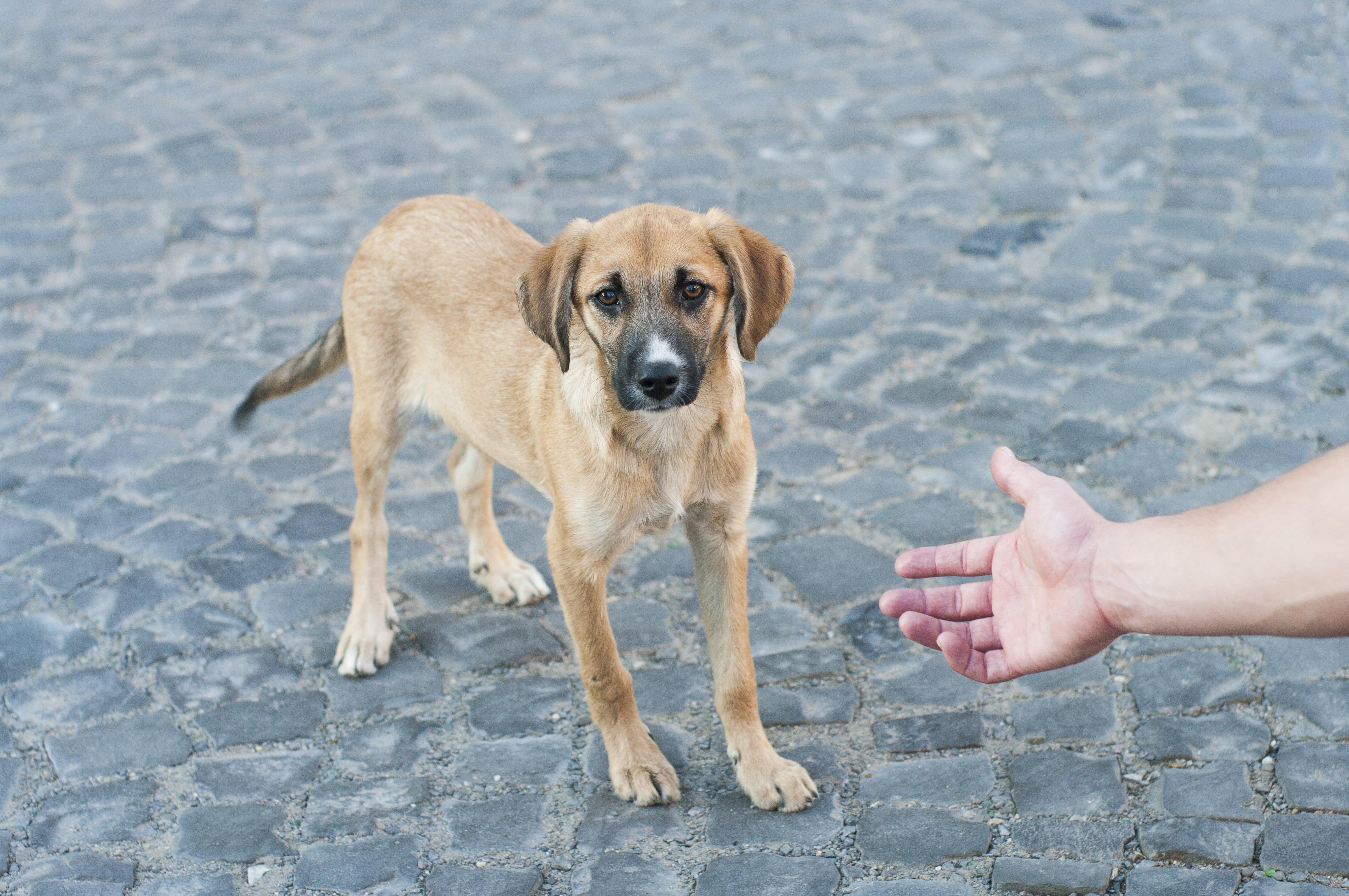 Gordon: la storia di un cane meraviglioso