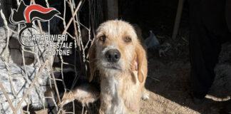 Sequestrato cani e suini