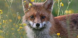 Testo sulla tutela di ambiente e animali