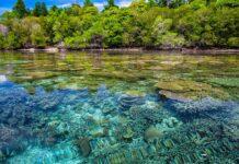 Ridurre le emissioni per salvare le barriere coralline