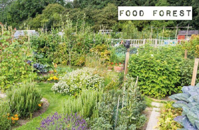 Foreste alimentari