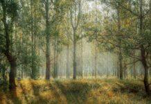 Rigenerazione delle foreste