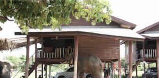 Elefanti e uomini Padiglione thailandese (image by Bankgog Project Studio) (articolo di Loredana Carena)