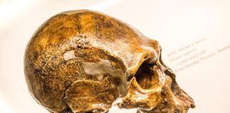 teschio Neanderthal