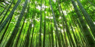 Costruzioni in bambù