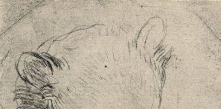 Disegno di orso leonardesco