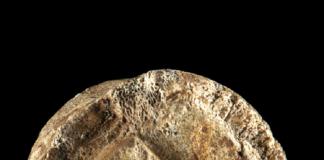 simbolismo di Neanderthal