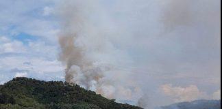 Devastante incendio negli oliveti
