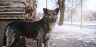 cani di Chernobyl