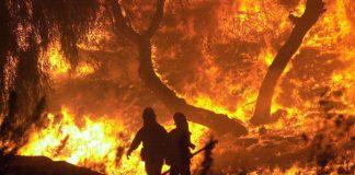 Incendi boschivi: