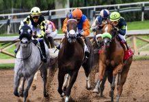 Due cavalli muoiono
