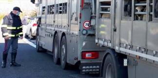 Cavalli e asini senza documentazione