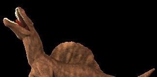 teropode gigante Spinosauro